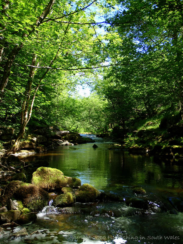 Saturday - Wild Upland Streams