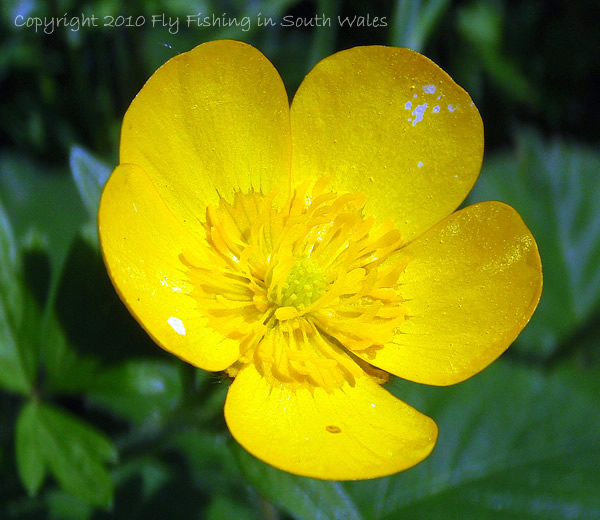 Saturday - Wild Upland Flowers