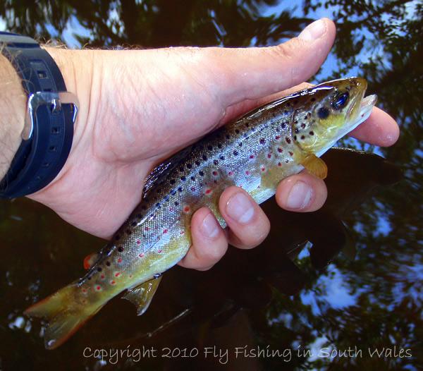 MFA River Work - A Wild Honddu Jewel
