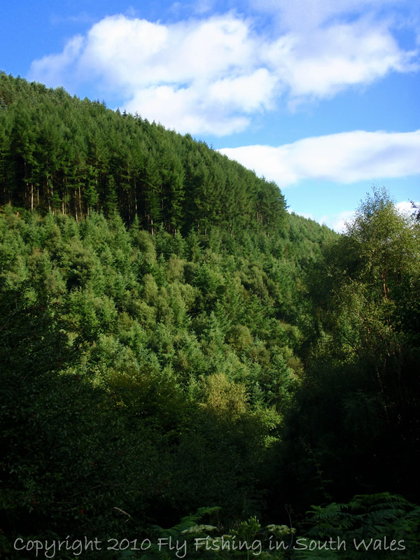 The Exploration of Stream: B - The small streams protective steep valley sides and, 100ft+ below, is the jewel herself