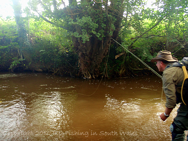 Fishing, Beer and the End of All Things Trout: Evidence of Rain with Coloured Waters
