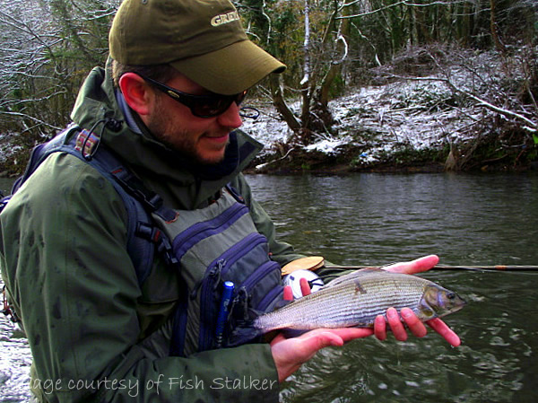 Fishing Revisited - FFISW with an abliging Thymallus thymallus