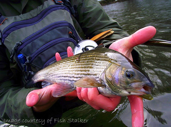 Fishing Revisited - FFISW with a rather decent grayling