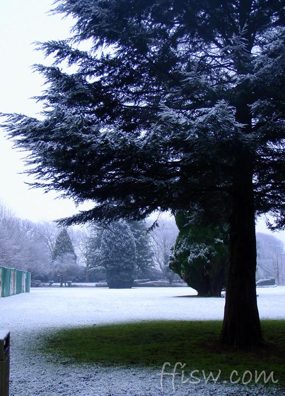 ...snow on a tree...