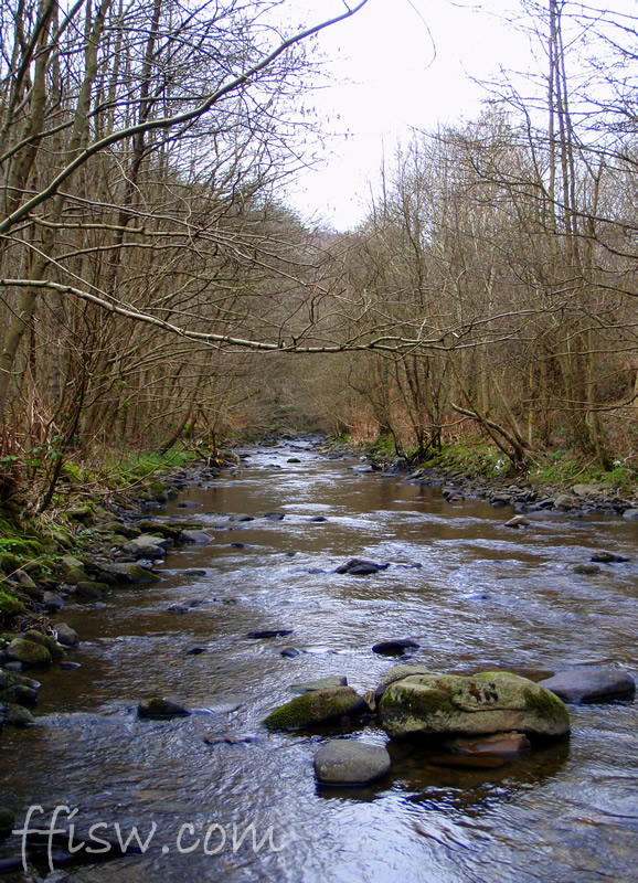 Trundling, wild, and hidden...the sounds of a small rustling stream is magic.