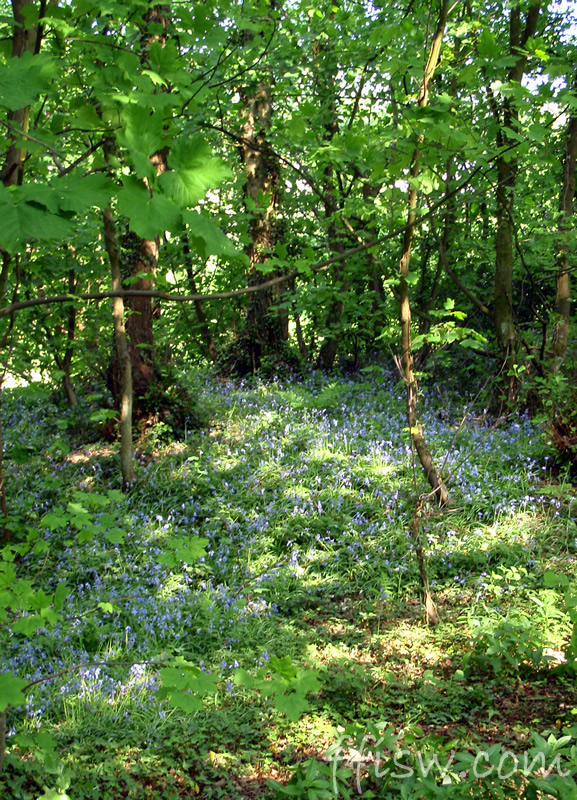 Blue Bells carpet everything...