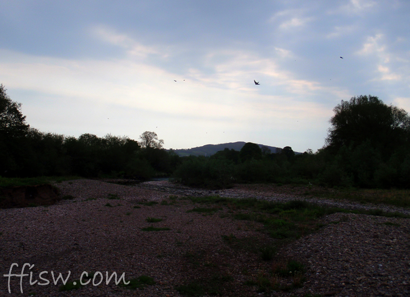 Sunday mornings on the River Usk - the Sand Martins take flight