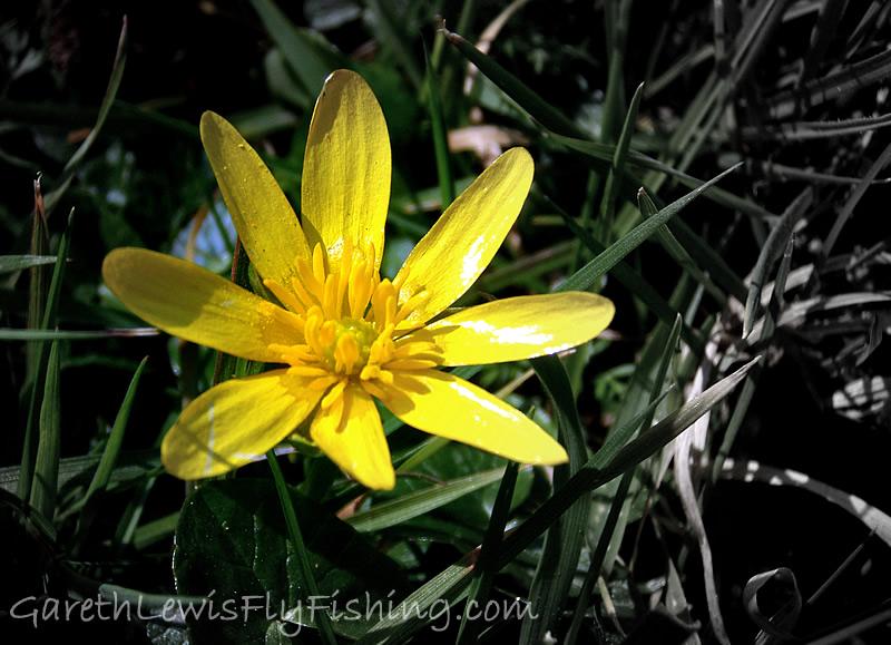 Spring begins...